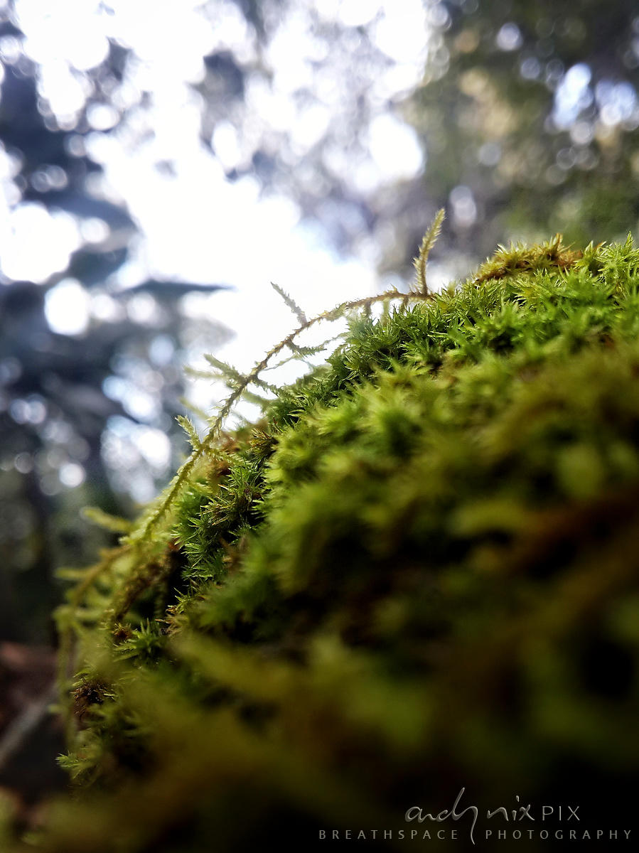 Closeup details of forest growth