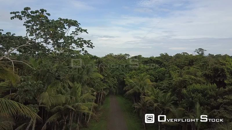Back Road in Jungle on Isla San Jose Panama