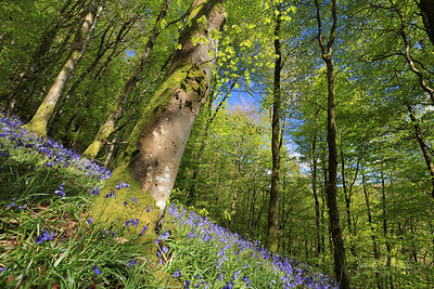 WOODLAND IN SPRING & SUMMER