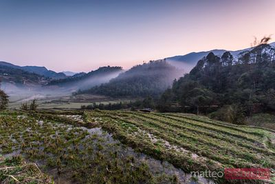 Vietnam, Sapa. Sunset over rice paddies with fog