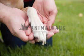Owners-Hands-With-Dog-Paw-in-Grass-Goodbye