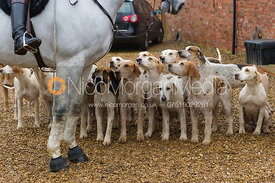 Cottesmore hounds at the meet