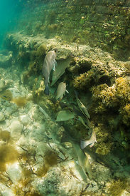 Snorkeling in Dry Tortugas National Park, Florida, USA