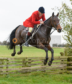 Peter Collins jumping a hunt jump at Thorpe Satchville - Quorn Hunt Opening Meet 2016