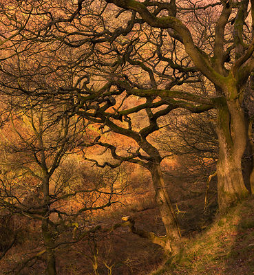 Winter trees near Abney clough