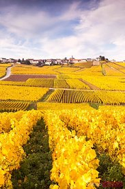 Vineyards of Cramant in autumn, Champagne Ardenne, France