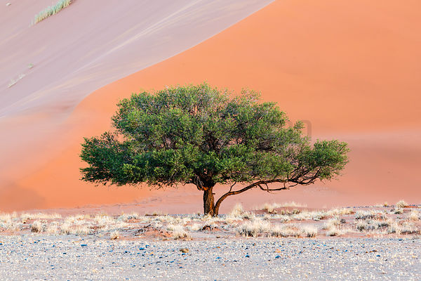 Tree and Dunescape