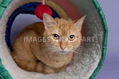 Cat relaxing in tunnel looking at camera