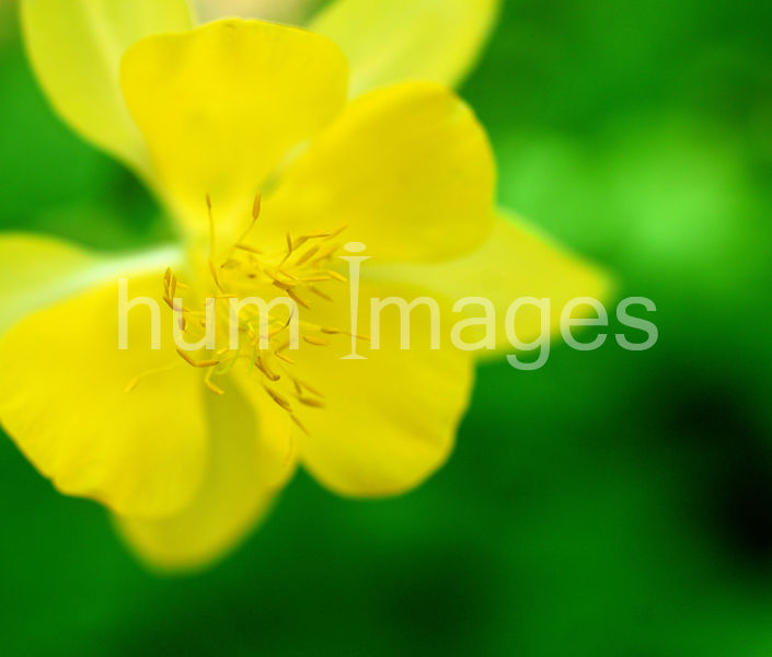 Flower Stock Photos: Yellow flower close up