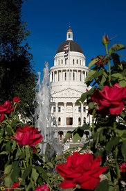 Capitol Building & Roses