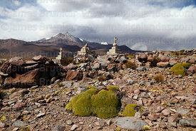 Stone cairns with crosses on hilltop and yareta plants (Azorella compacta), Guallatiri volcano in background, Las Vicuñas Nat...