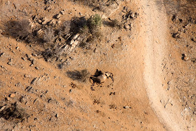 Aerial of dead elephant most likely the result of the worst drought (2008-2009) in more than a decade in Northern Kenya. Augu...