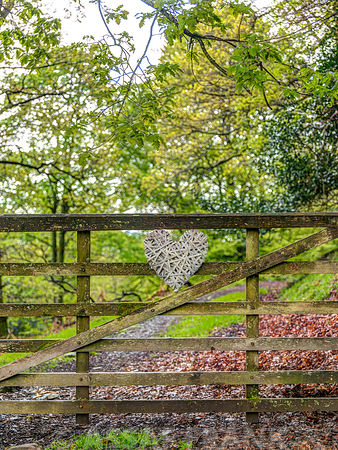 Heart on Fence in forest