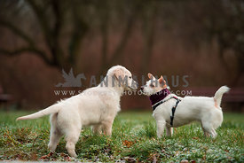 Two dogs playing and sniffing at each other
