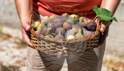 Man holding a basket with fresh figs.