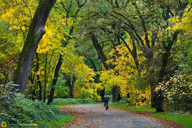 Bidwell Park in the Fall #2