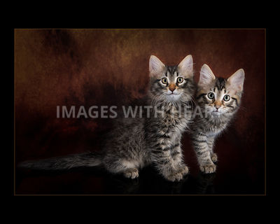 two standing  kittens posing, one is smiling