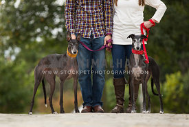 couple standing with 2 greyhounds