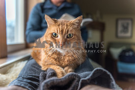 Cat looking at camera, sitting on man's legs while man is reading