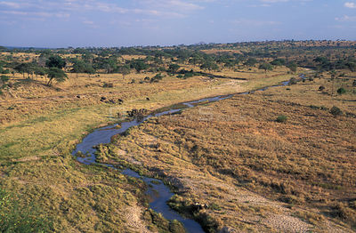 Aerial view of Tarangire NP with Elephant herd near river. Tanzania