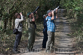 Birders watching and photographing an antwren from trail in San Francisco Reserve n Panama Province Panama