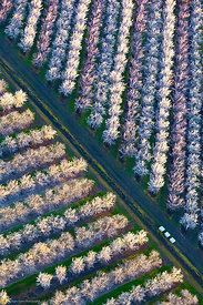 Almond Orchards in Bloom from the Air #21