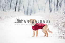 Young dog in red sweater in winter