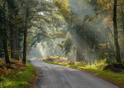 Sunbeams visible in a light mist adds so much atmosphere amongst the trees on  Rhinefield Ornamental Drive, New Forest, Hampshire, UK