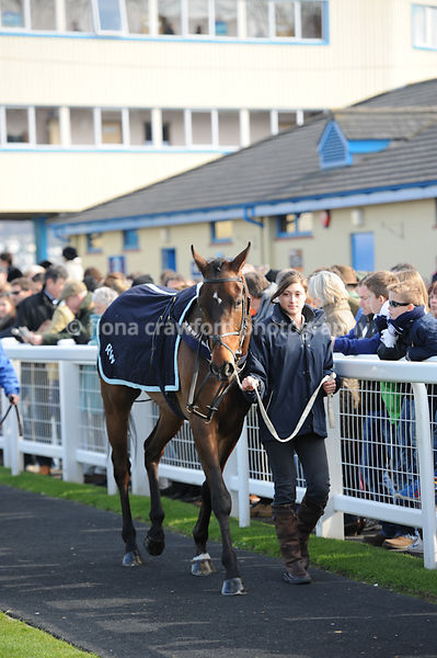 The Happy 50th Birthday Belinda Hannaford National Hunt Novices Hurdle Race