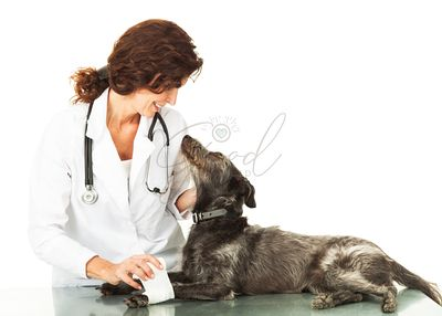 Injured Dog Looking Up at Caring Veterinarian