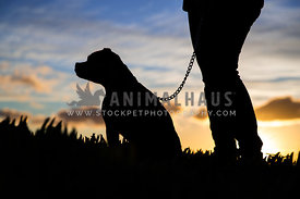 dog and owner silhouette