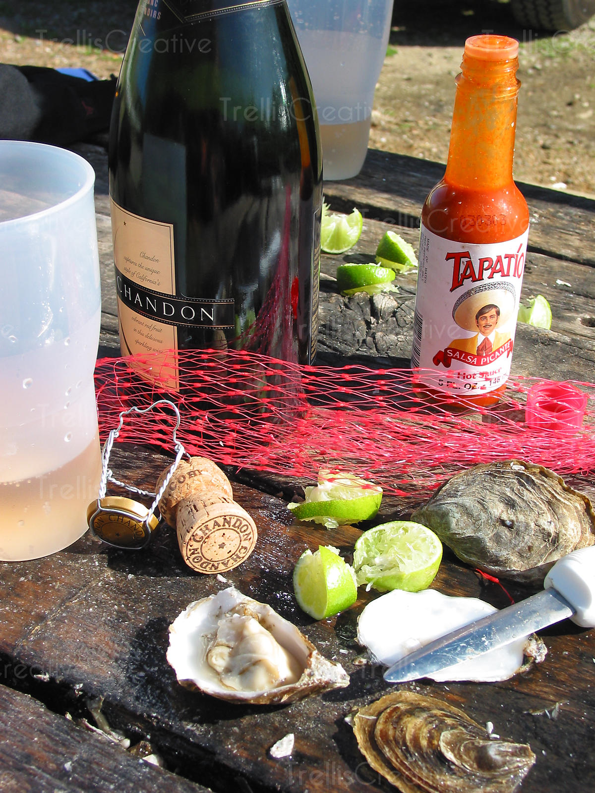 Shucked oysters and sparkling wine on a picnic table