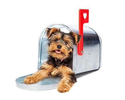 Cute Puppy In Mailbox With Heart Flag