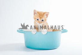orange kitten peering out of blue kitchen pot