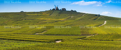 Vineyard and windmill Champagne Region near Vernezay
