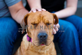 sharpei dog mix with eyes closed and people petting head