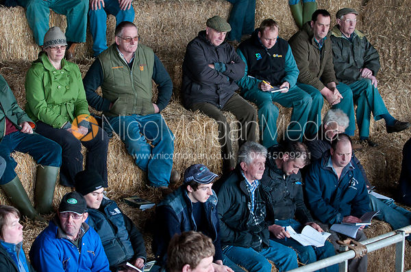 Prospective buyers around the ring at a cattle auction