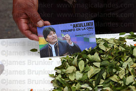Leaflet with president Evo Morales and coca leaves ( Erythroxylum coca ) at an event to celebrate Bolivia rejoining the 1961 ...