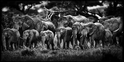 8652-Family_of_elephants_Amboseli_Kenya_2007_Laurent_Baheux