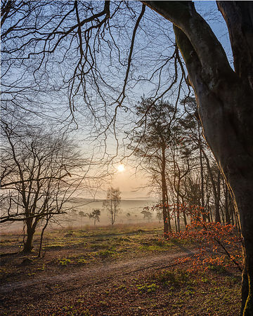 Looking into a misty sunrise at Woodbury Castle, near Exmouth, Devon, UK.