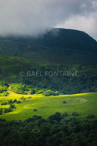 Meadow with sheeps in grass, Auvergne landscape and Puy de Dome