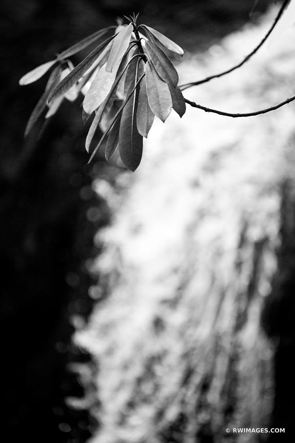 RHODODENDRON GROTTO FALLS SMOKY MOUNTAINS BLACK AND WHITE