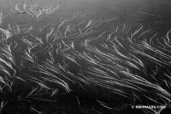 NATURE ABSTRACT REFLECTION LAKE MOUNT RAINIER NATIONAL PARK WASHINGTON BLACK AND WHITE