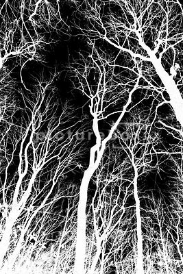 An abstract inversed image of bare trees branches.