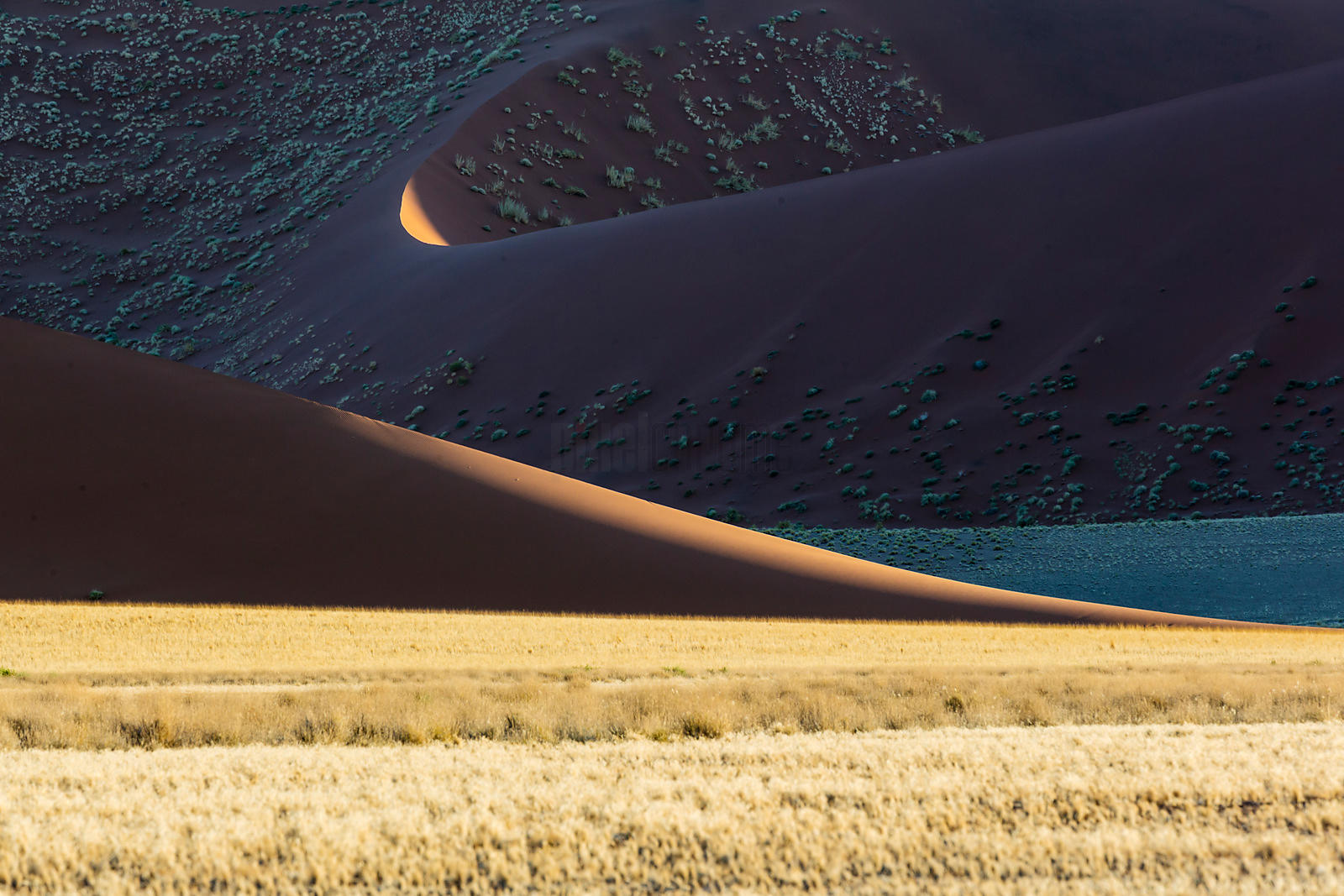 Dune Patterns at Sunset
