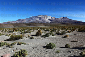 Isluga volcano and Central Andean dry puna desert, Isluga National Park , Region I , Chile
