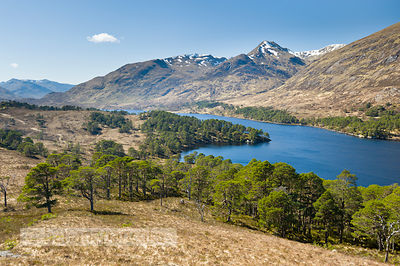 Glen Affric - BP2984