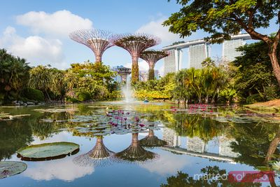 Supertree grove and pond, Gardens by the Bay, Singapore