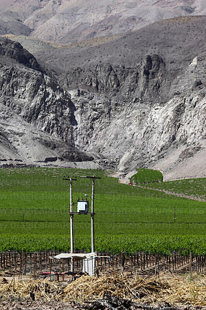 Electricity pylons and vineyards, Copiapó Valley, Region III, Chile