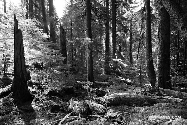 SOL DUC FALLS TRAIL OLYMPIC NATIONAL PARK WASHINGTON PACIFIC NORTHWEST FOREST BLACK AND WHITE